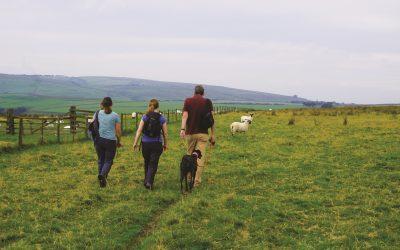 Exmoor Walks